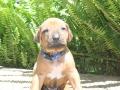 Puppies 4 weeks