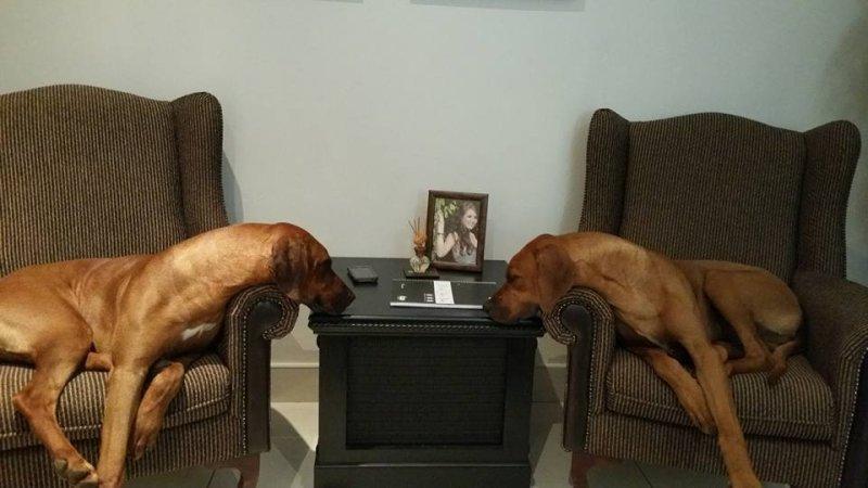 foto taken in my office. Ace and Scarlet