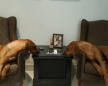 foto taken in my office. Ace and Scarlet