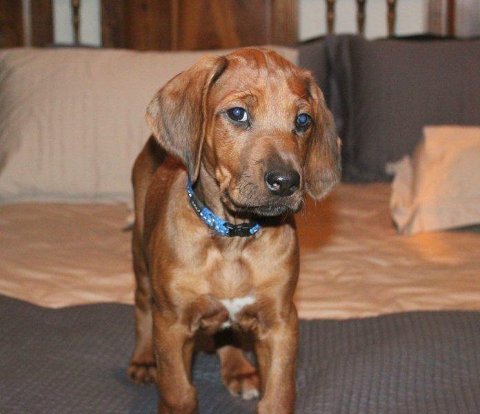 Nandi as a puppy
