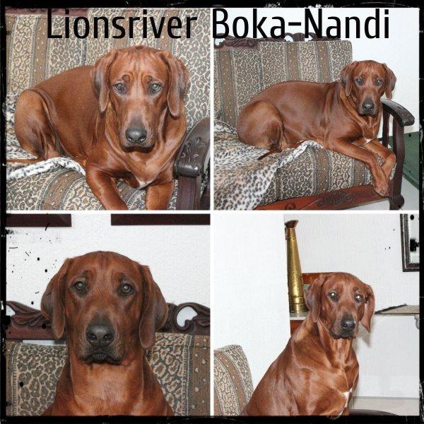 collage of Nandi