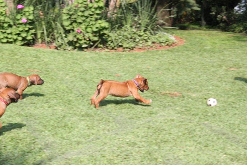 Kiara chasing the ball