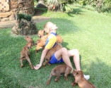 Mathee playing with the pups