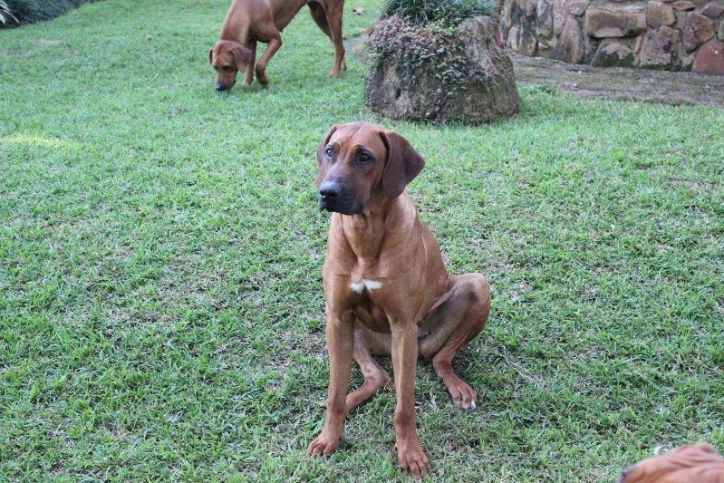 Scarlet 10 months