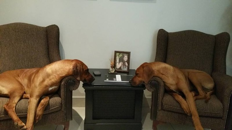 foto taken in my office. Scarlet and Ace