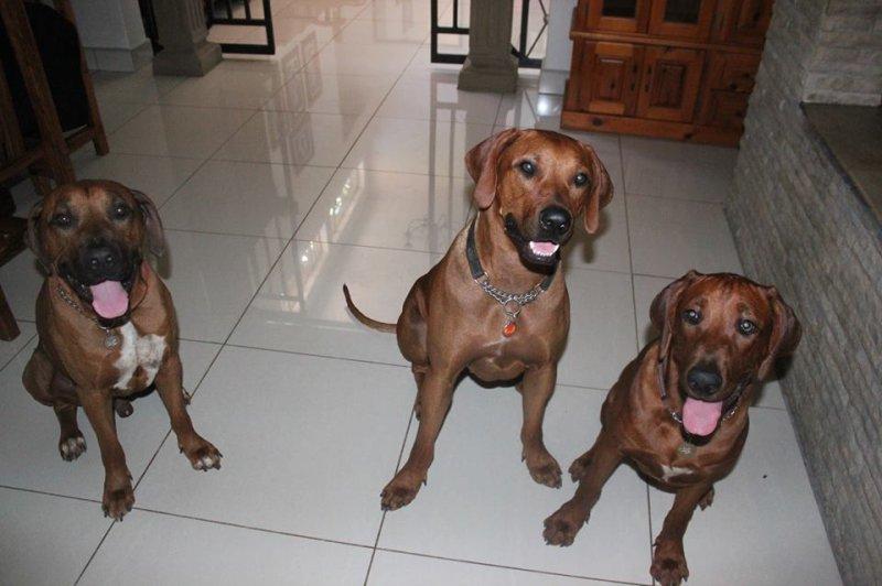al 3 honde