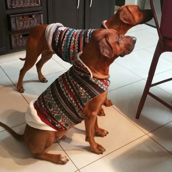 pajamas in winter 2016