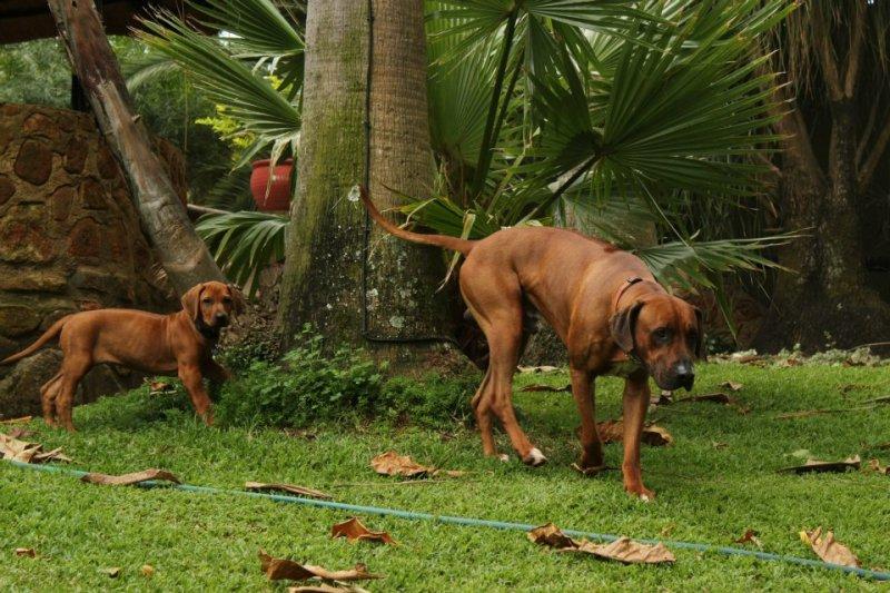 Tasha and Shumba wondering around