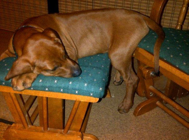 Tasha, dead tired