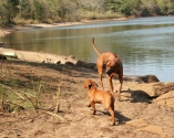 Tasha and Shumba at the dam